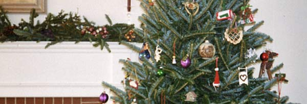 Choose And Cut Your Own Christmas Tree At Mountain Star Farms